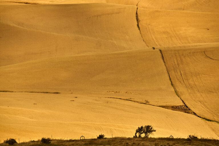 美國:八月的華盛頓州大麥田